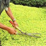 Empresa terceirizada de jardinagem