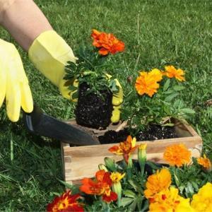 Terceirização de jardinagem